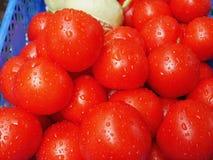 свежие зрелые томаты Стоковое Фото