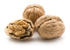 Свежие изолированные грецкие орехи Стоковая Фотография RF