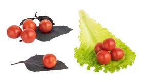 Свежие изолированные томаты вишни Стоковые Фото