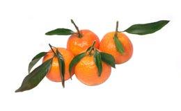 свежие изолированные tangerines листьев белые Стоковое Изображение