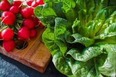 Свежие ингридиенты для редиска здорового †салата «красная, зеленое lettuc Стоковые Изображения RF