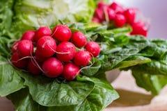 Свежие ингридиенты для редиска и зеленый цвет здорового †салата «красная позволили Стоковые Изображения