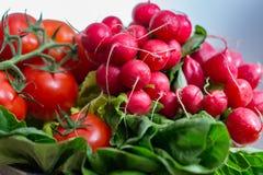 Свежие ингридиенты для редиска и томаты здорового †салата «красная, Стоковая Фотография RF
