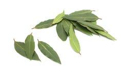 Свежие листья залива Стоковое Изображение RF