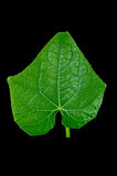 свежие листья зеленого цвета Изолировано на черной предпосылке Стоковое Фото