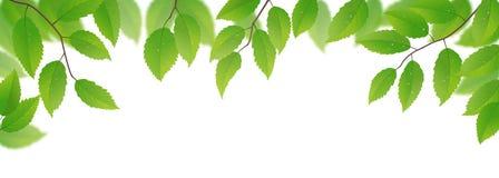 свежие листья зеленого цвета бесплатная иллюстрация