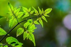 свежие листья зеленого цвета стоковые изображения