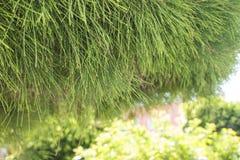 свежие листья зеленого цвета Стоковое Фото