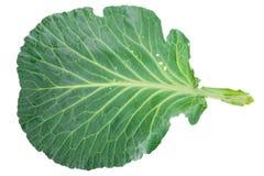 Свежие листья зеленой капусты стоковое изображение rf