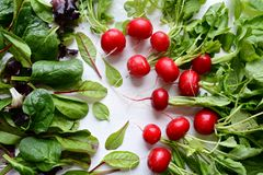 Свежие листья и редиска салата Стоковое Изображение