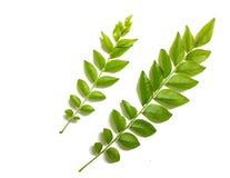 Свежие листья карри в белой предпосылке стоковое фото