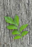 Свежие листья на оле древесине Стоковые Фото