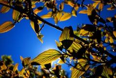 Свежие листья против неба Стоковое Изображение RF