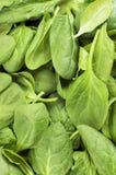 Свежие листья шпината закрывают вверх Стоковые Изображения RF