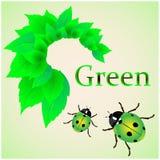 Свежие листья Ladybug Стоковое Изображение RF