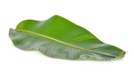 Свежие лист банана на белизне Стоковая Фотография