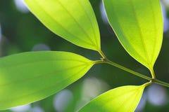 Свежие и зеленые листья в природе Стоковые Изображения RF
