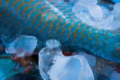 Свежие и красочные рыбы на maket Стоковые Фотографии RF
