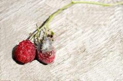 Свежие и moldy ягоды на светлой поверхности! Стоковые Фотографии RF