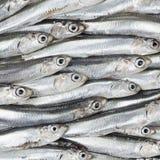 Свежие камсы подготовили текстуру предпосылки морепродуктов. Сырцовая еда. Стоковые Фото