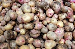 свежие картошки Стоковое Изображение RF