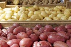 свежие картошки Стоковые Фото