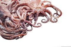 Свежие кальмары и слезанный изолированный на белой предпосылке Стоковые Фото