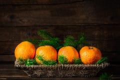 Свежие Клементины или Tangerines и ветви дерева Xmas стоковые изображения