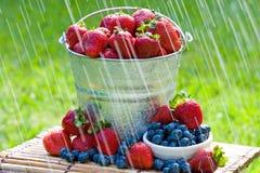 свежие клубники дождя Стоковое фото RF