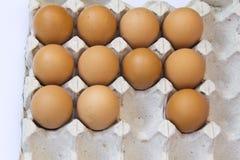 свежие коричневые яичка в подносе коробки Стоковые Изображения RF
