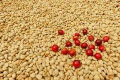 Свежие кофейные зерна перед жарким Стоковое Изображение