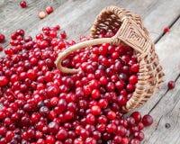 Свежие красные клюквы и ягоды в корзине на старой таблице Стоковые Фото
