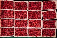 Свежие красные поленики ягод на рынке в подносах, контейнерах Взгляд сверху Стоковые Изображения