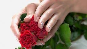 Свежие красные розы в руках деланных маникюр женщиной видеоматериал
