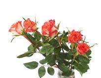 Свежие красные розы над предпосылкой изолированной белизной Стоковое Изображение RF