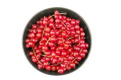 Свежие красные смородины в шаре на белом конце предпосылки вверх Стоковые Изображения