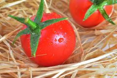 свежие красные томаты Стоковые Изображения