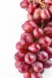 Свежие красные фиолетовые виноградины Стоковое Фото