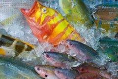 Свежие красочные рыбы на рынке, Японии Стоковое Изображение RF