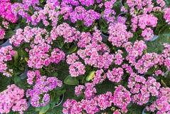 Свежие красочные цветки от поля Стоковое Изображение