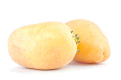 свежие клубни картошек на изолированной еде белой картошки предпосылки здоровой Vegetable Стоковые Фото