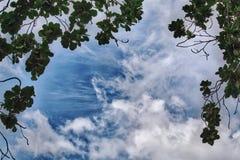 Свежие листья дерева против голубого облачного неба Стоковая Фотография RF