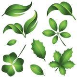 свежие листья зеленого цвета иллюстрация штока