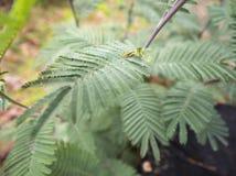 Свежие листья папоротника Стоковые Изображения RF