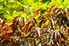 свежие листья Стоковое фото RF