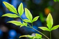 свежие листья Стоковое Изображение