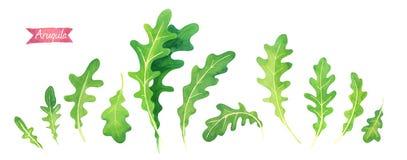 Свежие листья Arugula изолированные на белой иллюстрации акварели Стоковые Фото
