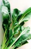 Свежие листья mangel стоковое изображение rf