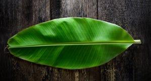 Свежие лист банана на древесине Стоковые Фотографии RF