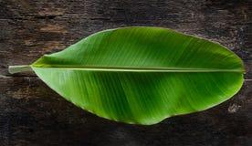 Свежие лист банана на древесине Стоковые Изображения